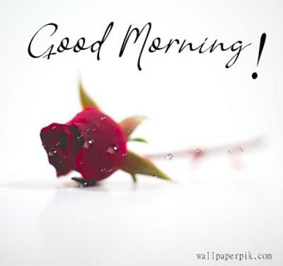 good morning rose wish download