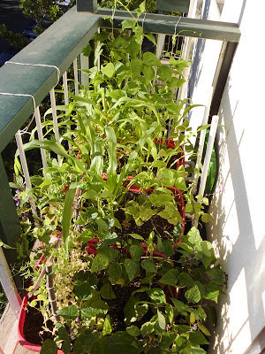 Right side balcony garden