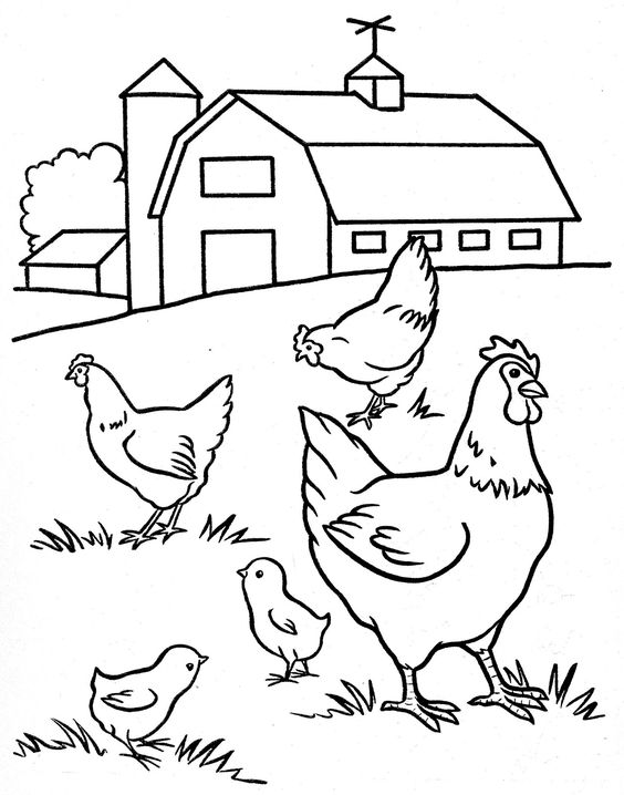 Tranh cho bé tô màu những con gà trên nông trại