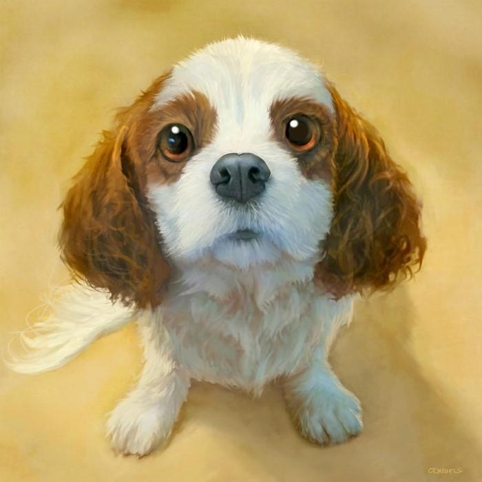 Портреты собак. Sean O'Daniels