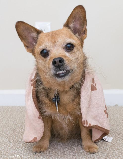 Luv & Emma's Dry Pets microfiber towel