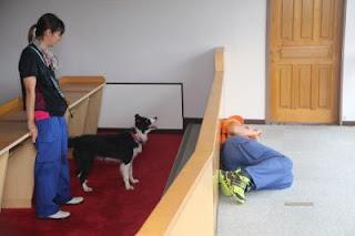 brincando com cães