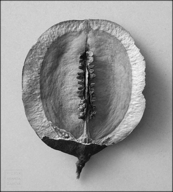 fotografia,naturaleza,fruto,limites,interior,cascara,semillas