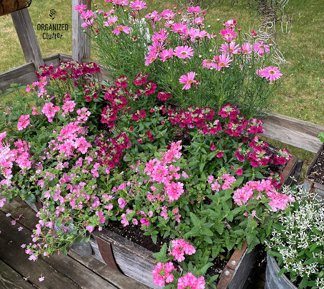 Photo of pink annuals planted in a horizontal barrel half