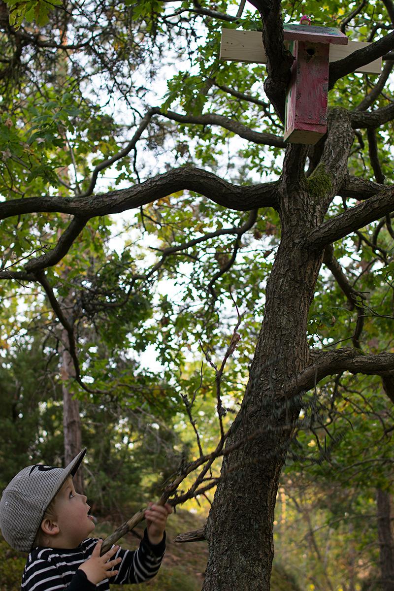 Fäst en fågelholk i ett träd utan att skada trädet.