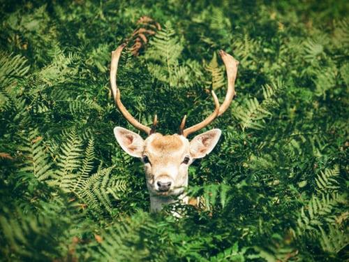 Bambi.