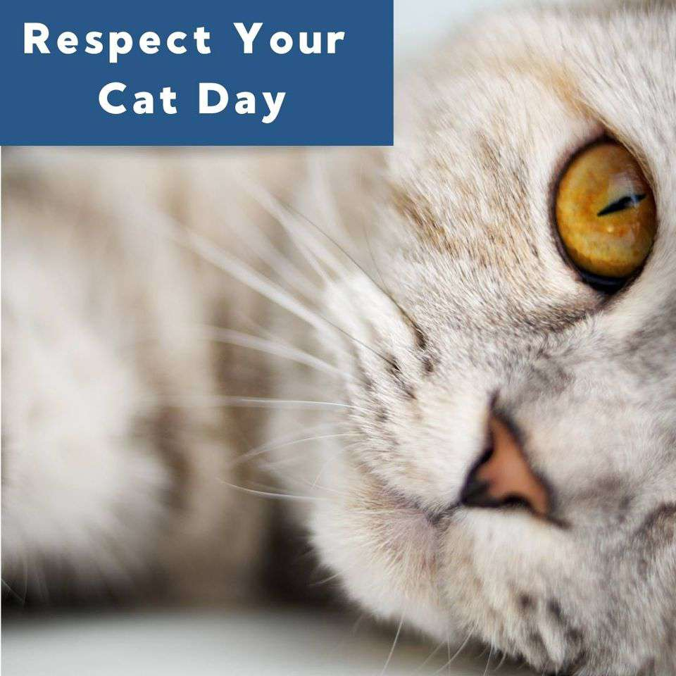 Respect Your Cat Day Wishes for Whatsapp