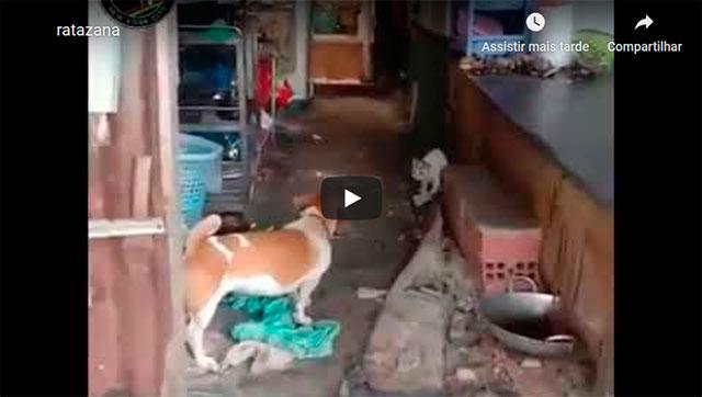 https://www.ahnegao.com.br/2019/10/cachorro-e-gato-se-unem-para-enfrentar-o-ultimo-chefao-dos-ratos.html