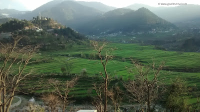 Fields of Dalhousie
