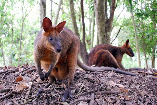 strangest fact around the world tasmania kkday