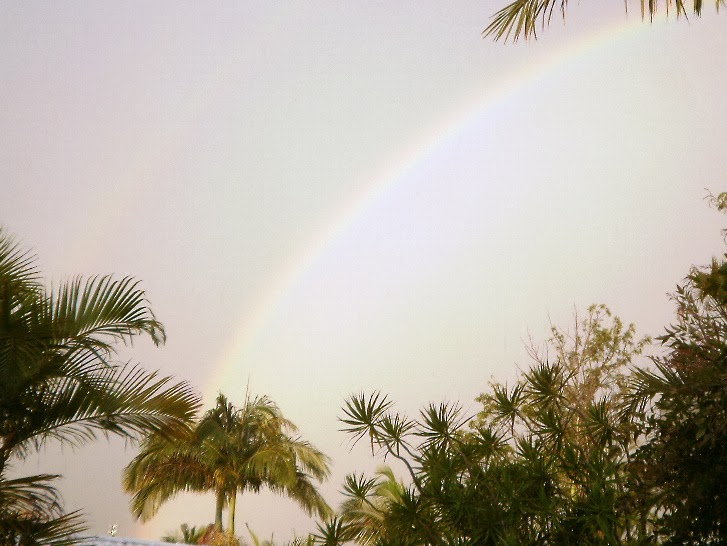 pale rainbow sky above palm trees