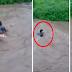 PANOORIN: Batang nahulog sa rumaragasang ilog sa North Cotabato na-rescue!