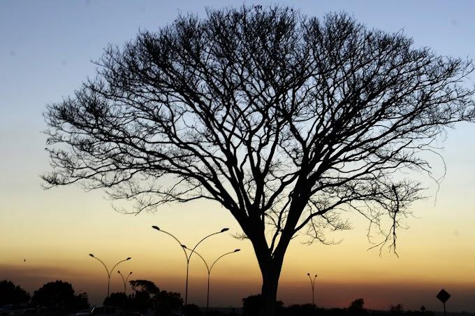 Baixa umidade: Defesa Civil declara estado de emergência novamente no DF