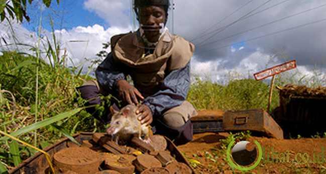 Ranjau Mozambik