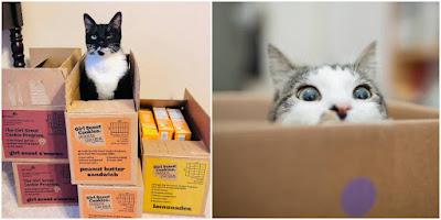 ¿Por qué a los gatos les gustan las cajas?
