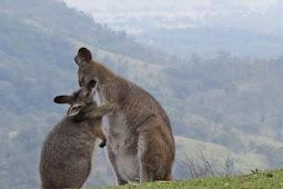7 hal unik yang hanya ada di Australia, penasaran?