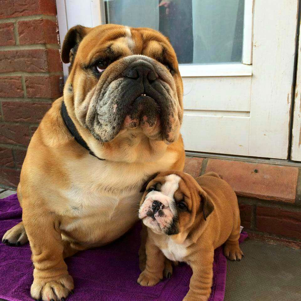 Cute dogs, dog photo, best dog pictures, adorable dog