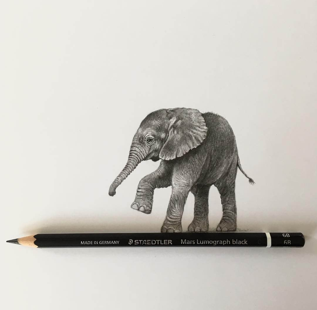 03-Elephant-and-the-Pencil-Julie-Rhodes-Color-Pencil-Wild-Animal-Drawings-www-designstack-co