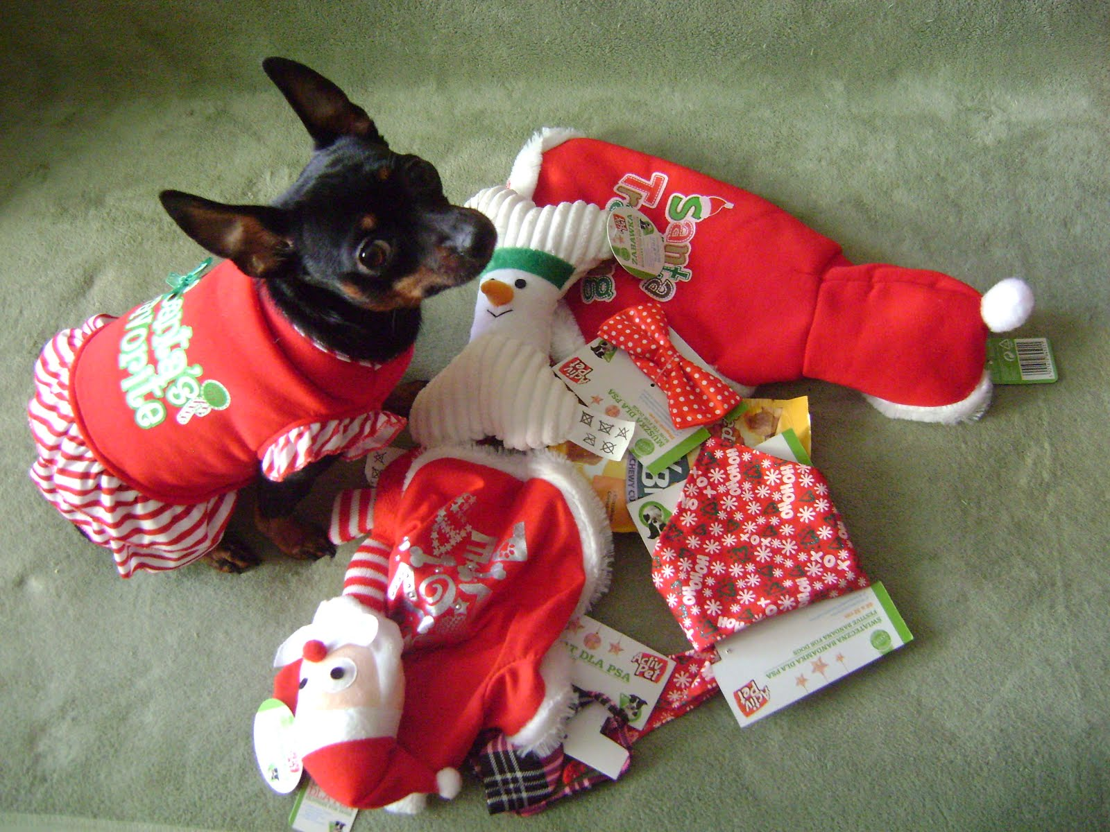 śladami Zwierząt Mikołaj 6 Grudnia
