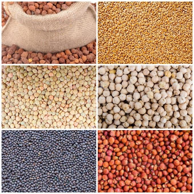 Commodity Update : चना और काबूली चना के दाम मुंबई में तेज, उड़द तथा मसूर में बाजार मंदा