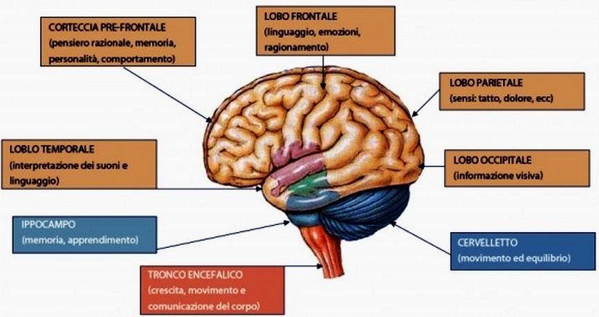 Didattica e cervello g rizzolatti i neuroni specchio e - Neuroni specchio empatia ...