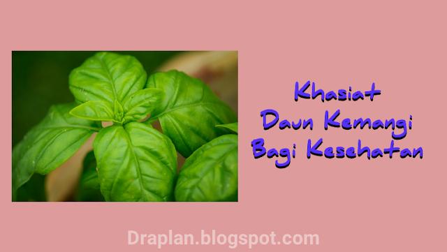 Berbicara perihal daun kemangi mungkin sobat draplan ada yang suka dan ada juga yang ti Berikut 7 Khasiat Daun Kemangi Untuk Kesehatan