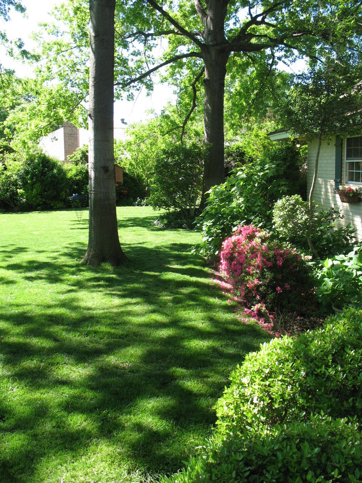 Miss Bloomers : Garden Walk