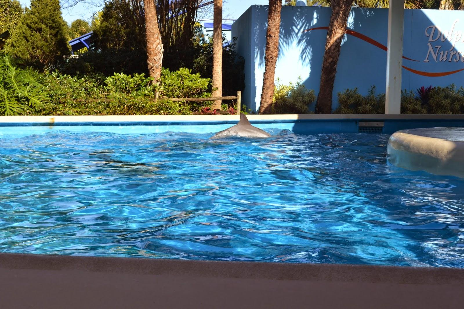 Seaworld Orlando 2