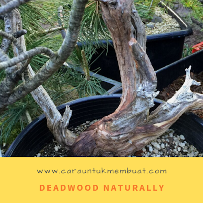 Deadwood Naturally