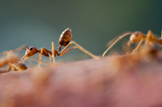 Ants - Colony Optimization:  ants prefer to work hard