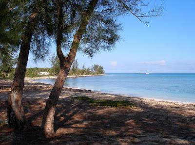 Beach with shady trees and calm sea