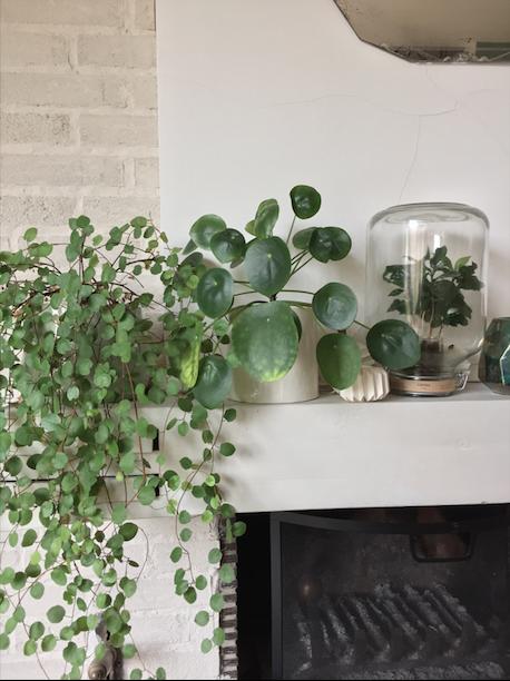 urban jungle bloggers plants words. Black Bedroom Furniture Sets. Home Design Ideas