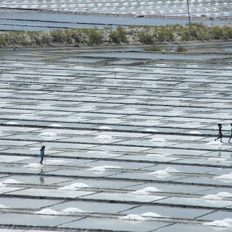 Workers at Salt Pans in Point Calimere - உப்பளம், கோடியக்கரை  - Velankanni