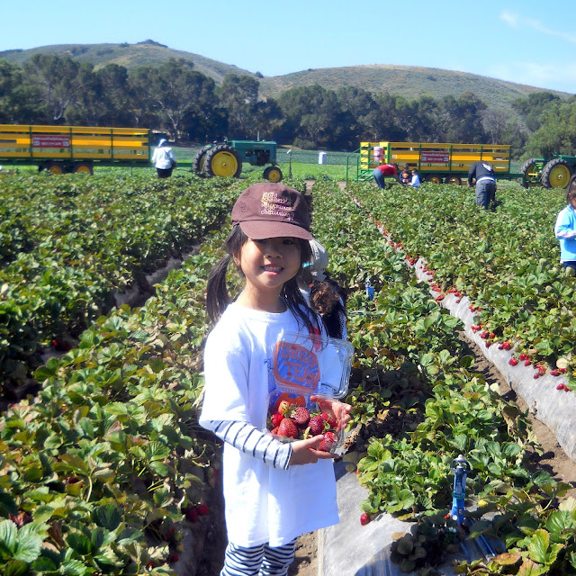 Sign up for the farm tour to pick your own berries at Underwood family farms in Moorpark