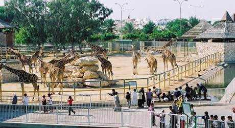 حديقة الحيوان قطر