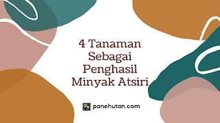 4 Tanaman Sebagai Penghasil Minyak Atsiri