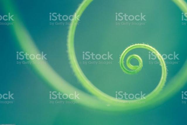 celadon-green