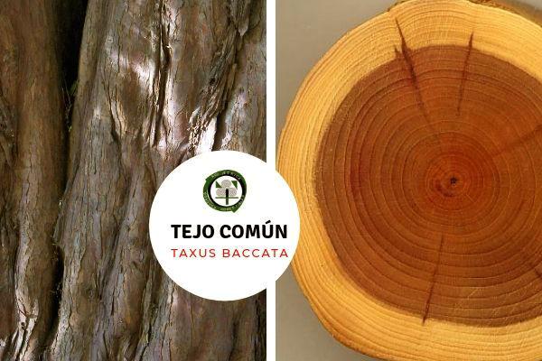 La madera del tejo es de muy buena calidad, de color rojizo con albura amarillenta