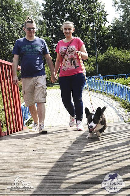 jak oduczyć psa ciągnięcia na smyczy, pies ciągnie na szmyczy, chodzenie przy nodze, nauka chodzenia przy nodze, pies ciągnie, pies chodzi przy nodze
