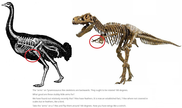 The Backwards Arms of the T-Rex
