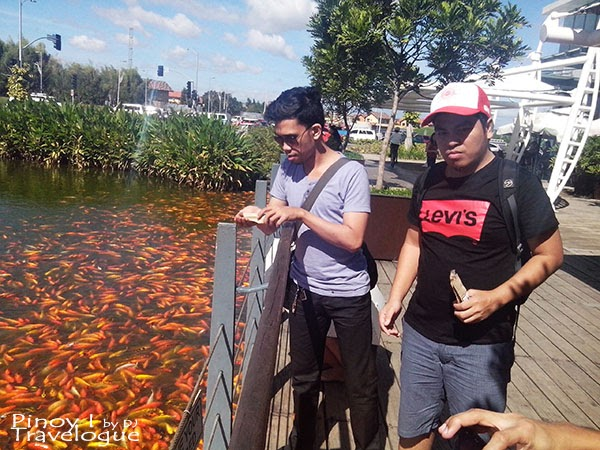 Fish feeding in Nuvali