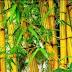 Yuk Simak Kisah Limbah Bambu Menjadi Sumber Penghasilan