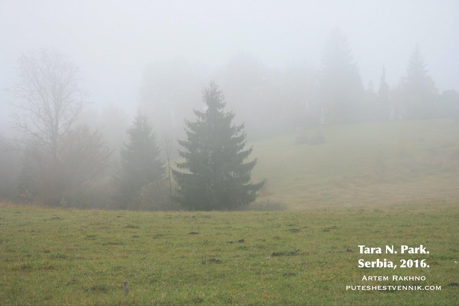 Ель в туманном поле