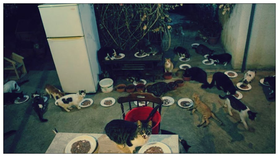 gatos de Chipre alimentándose