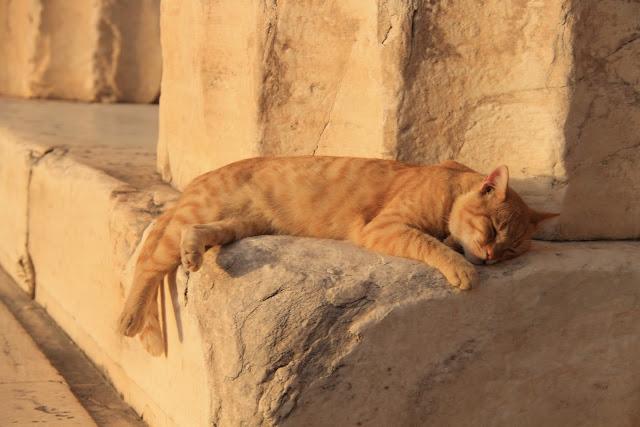 Kissa Acropoliksella, Ateena Kreikka - nähtävyydet ja kokemukset parisuhdematkalla