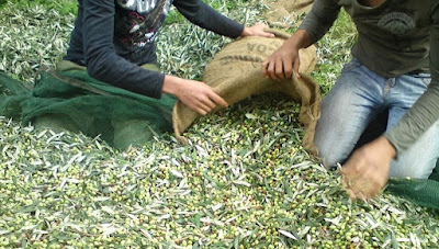 Ήπειρος: Η ανομβρία πλήττει τις καλλιέργειες