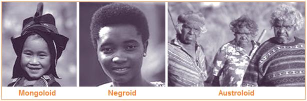 Macam-Macam Ras Kaukasoid, Mongoloid, Negroid, dan Ras Khusus