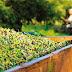 17 έως 27 Νοεμβρίου οι αιτήσεις για το κορωνοεπίδομα στις λαδολιές.
