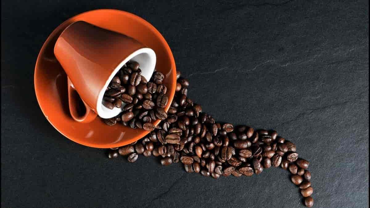 Qual a diferença entre café gourmet e café especial