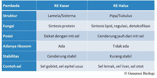 artikel retikulum endoplasma, fungsi retikulum endoplasma halus adalah untuk sintesis, arti retikulum endoplasma halus, fungsi retikulum endoplasma halus adalah, arti retikulum endoplasma kasar, animasi retikulum endoplasma, apa retikulum endoplasma, retikulum endoplasma berperan dalam hal apa, sebutkan retikulum endoplasma yang ada pada sel, retikulum endoplasma berupa mesosom, retikulum endoplasma beserta fungsinya, retikulum endoplasma berfungsi dalam hal, fungsi retikulum endoplasma berkaitan dengan proses sintesis protein, retikulum endoplasma dan badan golgi, retikulum endoplasma kasar berfungsi, fungsi retikulum endoplasma brainly, gambar retikulum endoplasma beserta fungsinya, retikulum endoplasma kasar berfungsi sebagai, gambar retikulum endoplasma beserta keterangannya, retikulum endoplasma kasar berkaitan dengan fungsi sintesis, fungsi retikulum endoplasma berkaitan dengan sintesis protein, retikulum endoplasma halus berfungsi sebagai, hubungan retikulum endoplasma badan golgi dan lisosom, retikulum endoplasma halus banyak terdapat di, retikulum endoplasma sesuai ciri ciri organel, ciri retikulum endoplasma, ciri retikulum endoplasma kasar, cara retikulum endoplasma menetralkan racun, retikulum endoplasma dan ribosom berfungsi sebagai, retikulum endoplasma dibangun